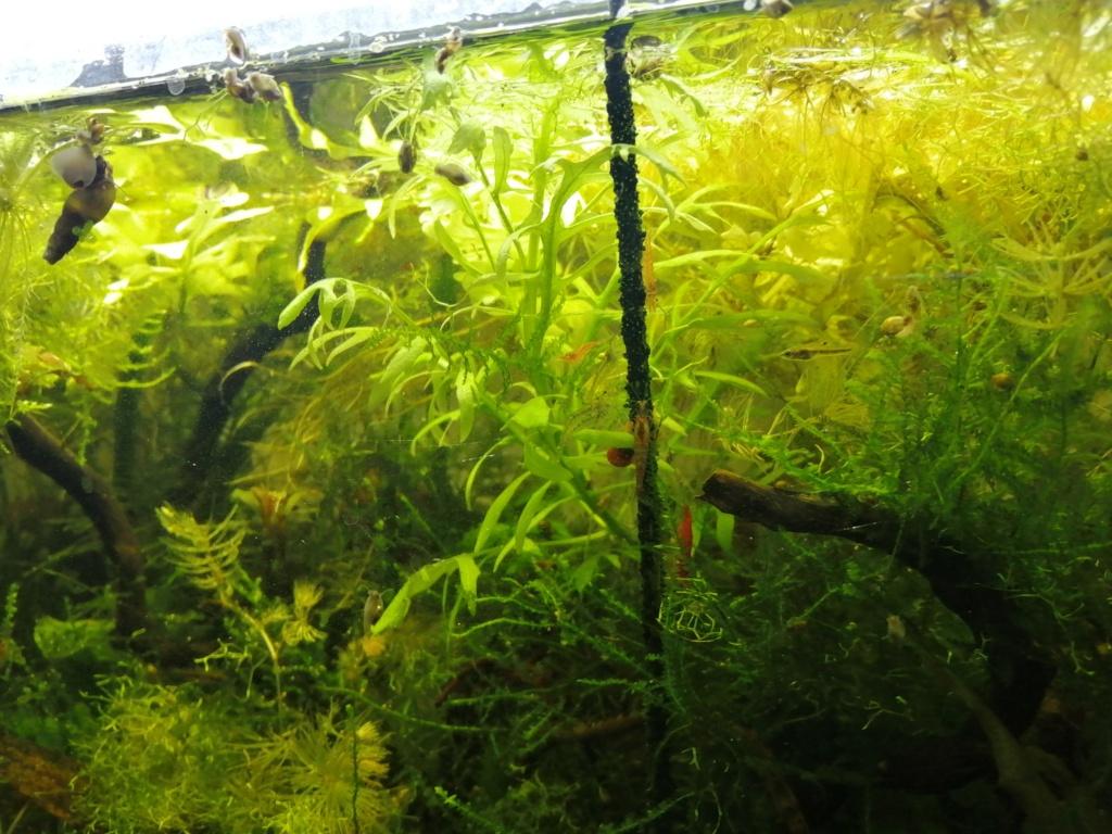 Plantes et sol 100% pouzzolane Img_2110
