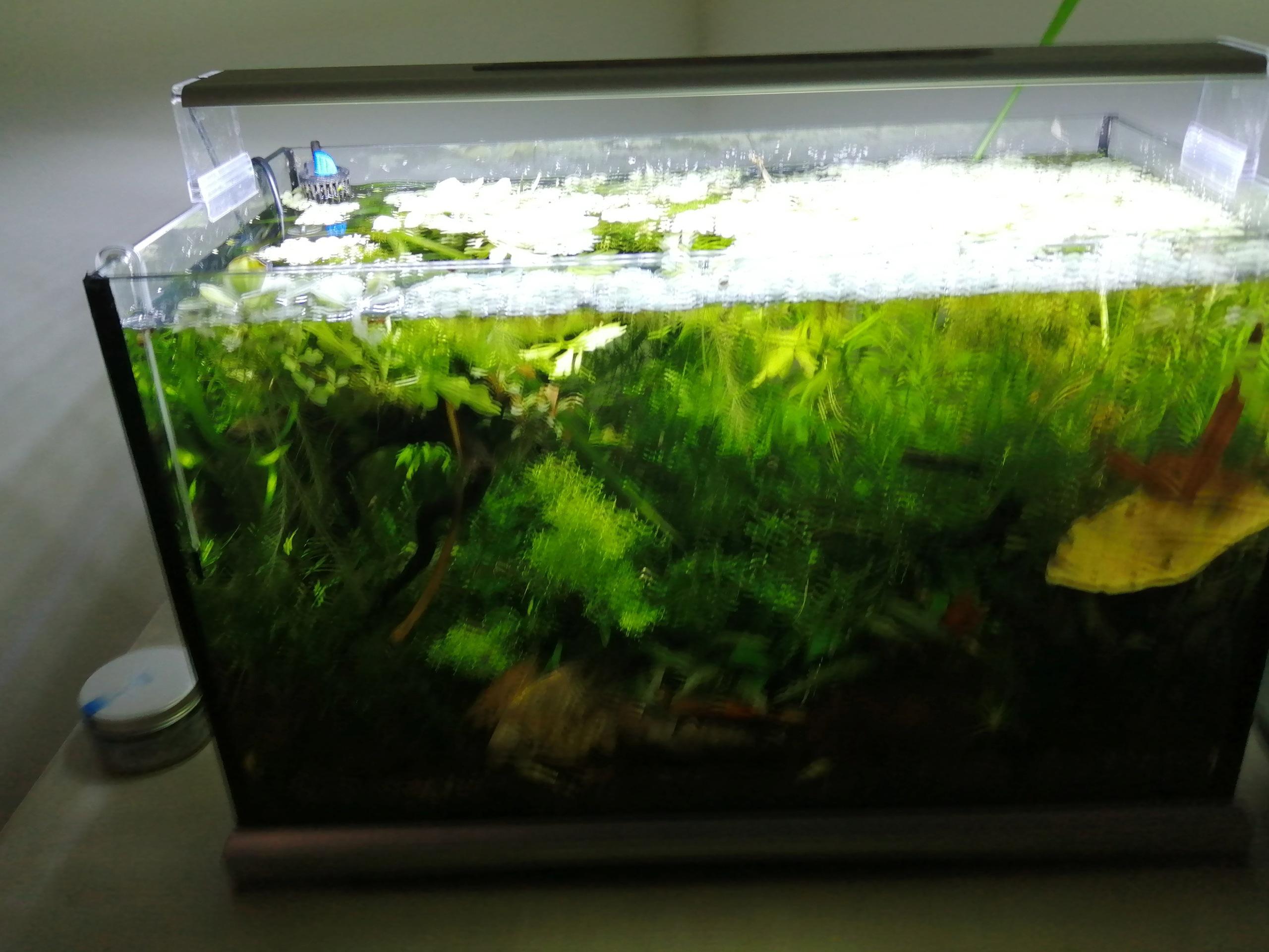 Plantes et sol 100% pouzzolane Img_2115