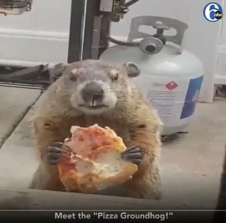 I need a moa expert here Pizza-10