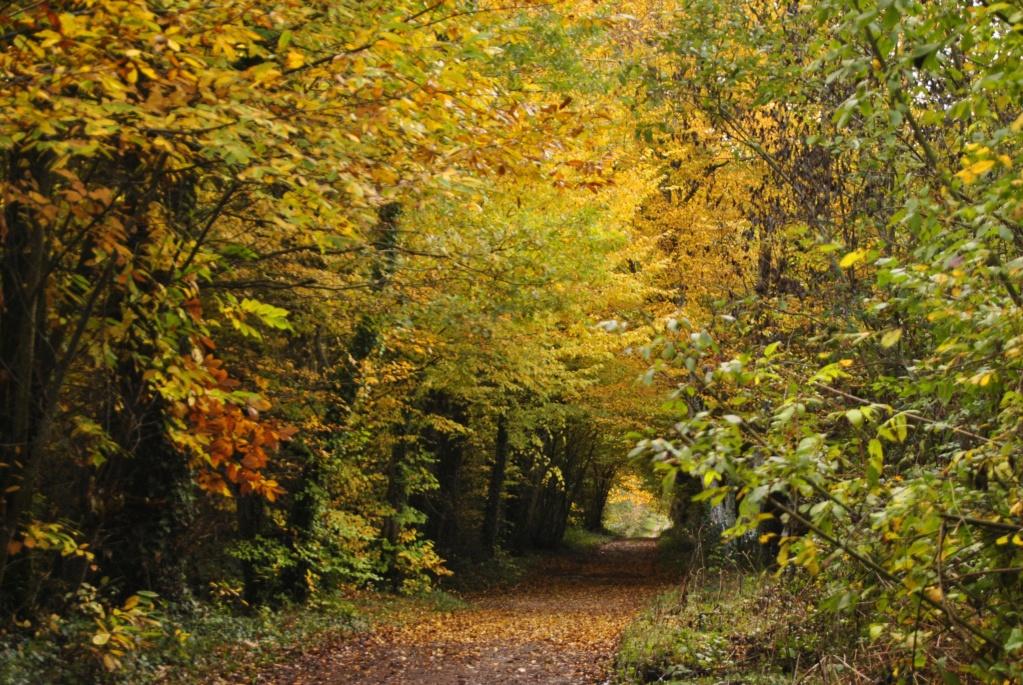 Le temps de l'automne _dsc0810