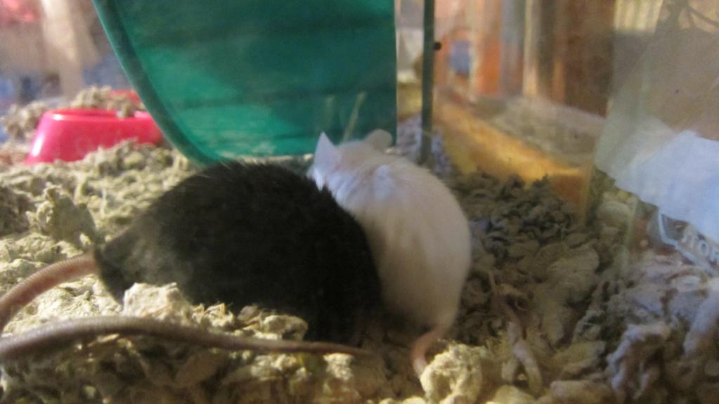 Meet Blackjack and Rayla! Img_1812