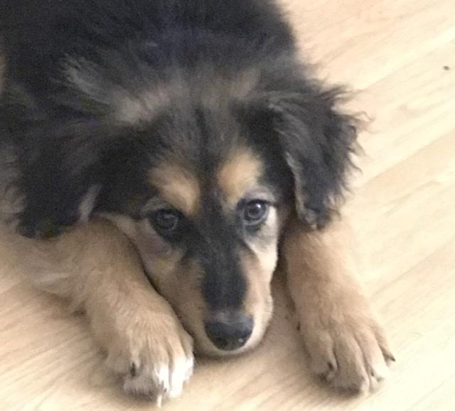 Nouka (ex Bretzel) - femelle- fourrière de Târgu Frumos - Réservée adoption (25)  C5feb710