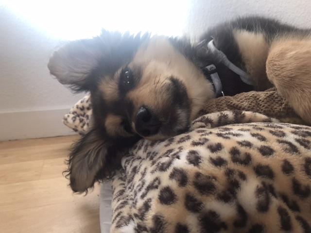 Nouka (ex Bretzel) - femelle- fourrière de Târgu Frumos - Réservée adoption (25)  F97cb110