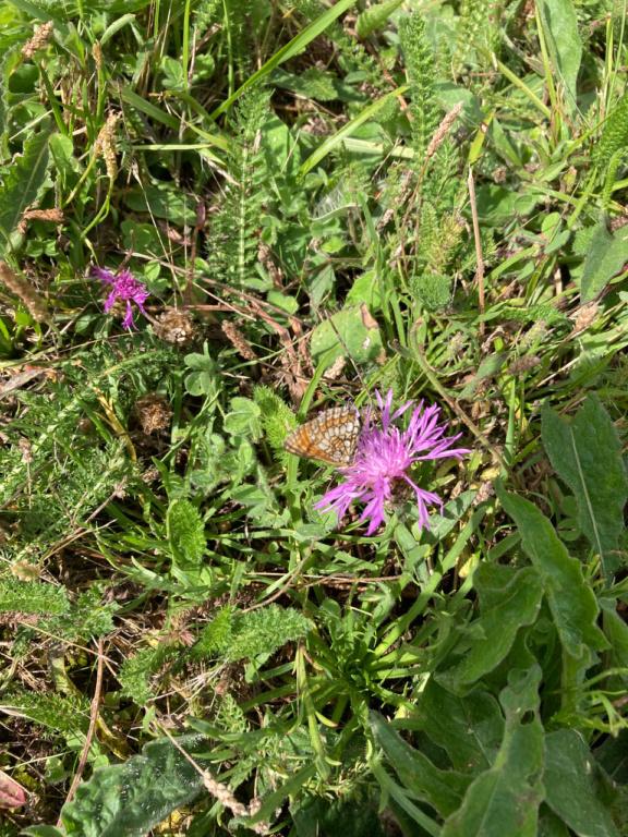 identification papillon Img_1615