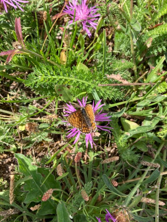 identification papillon Img_1617