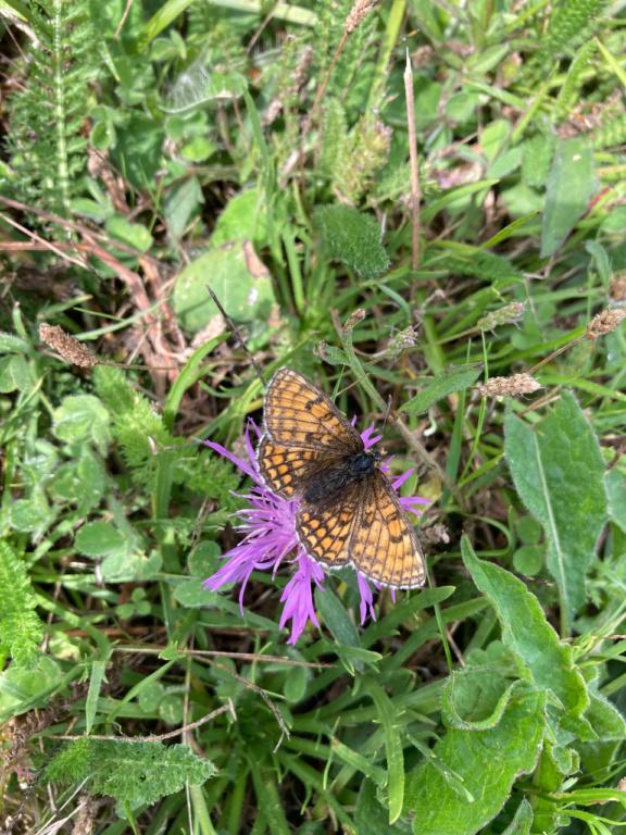 identification papillon Img_1618