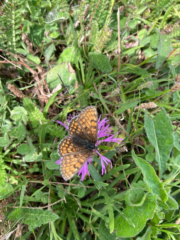identification papillon Img_1620