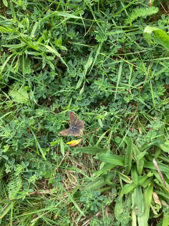 identification papillon Img_1621