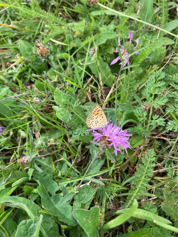 identification papillon Img_1712