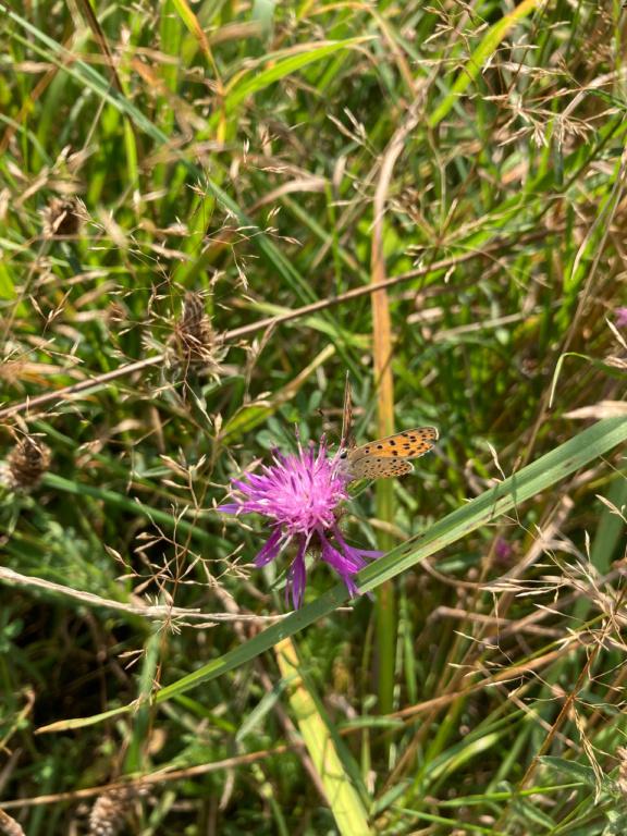 identification papillon Img_1714
