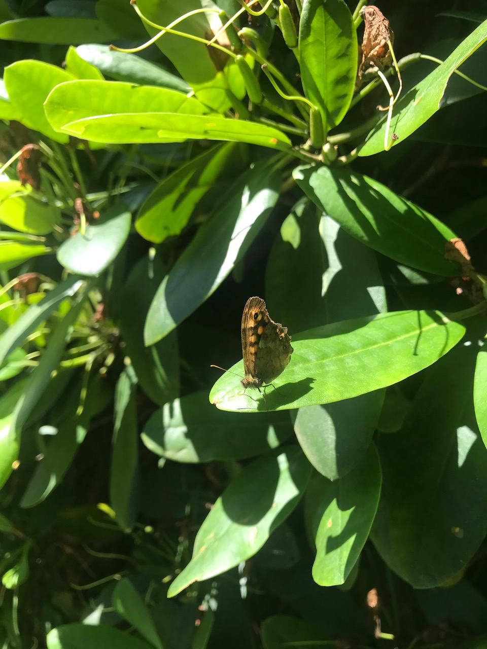 papillonn inconnu Img_8513