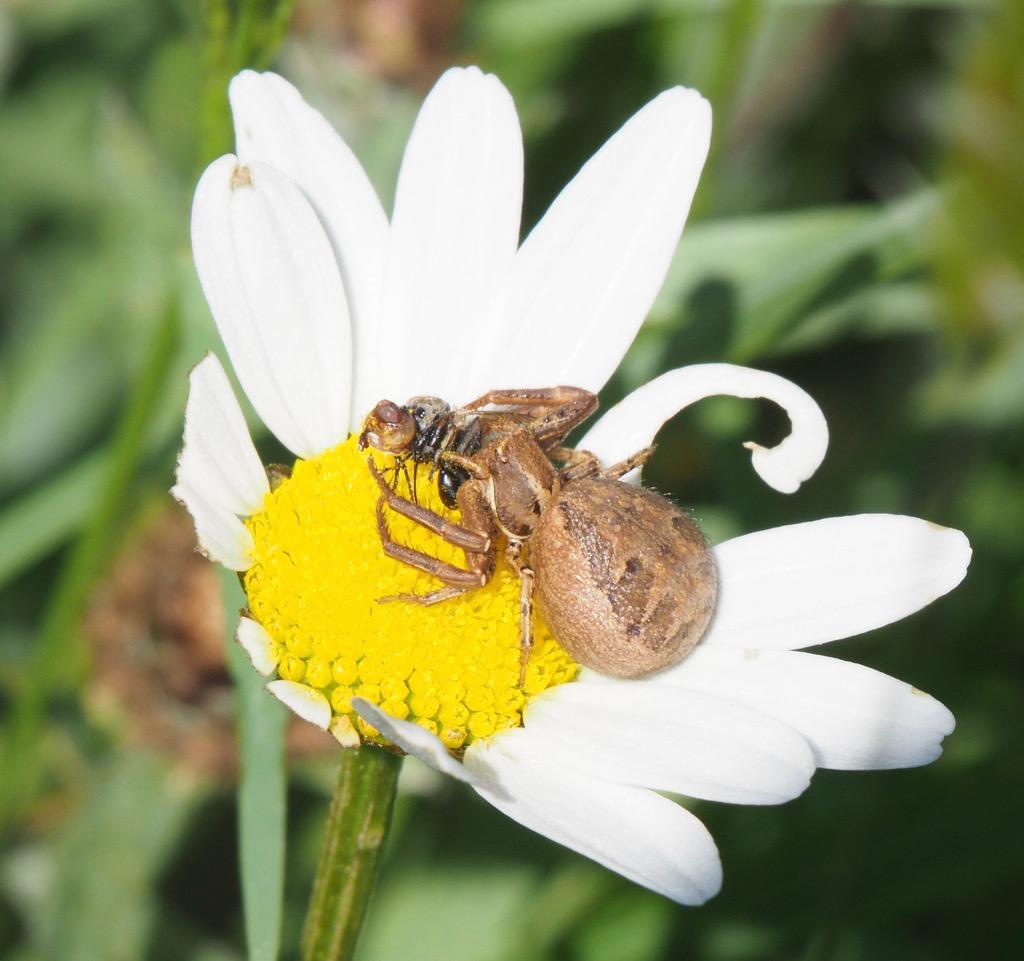 identification arachnide P6040312