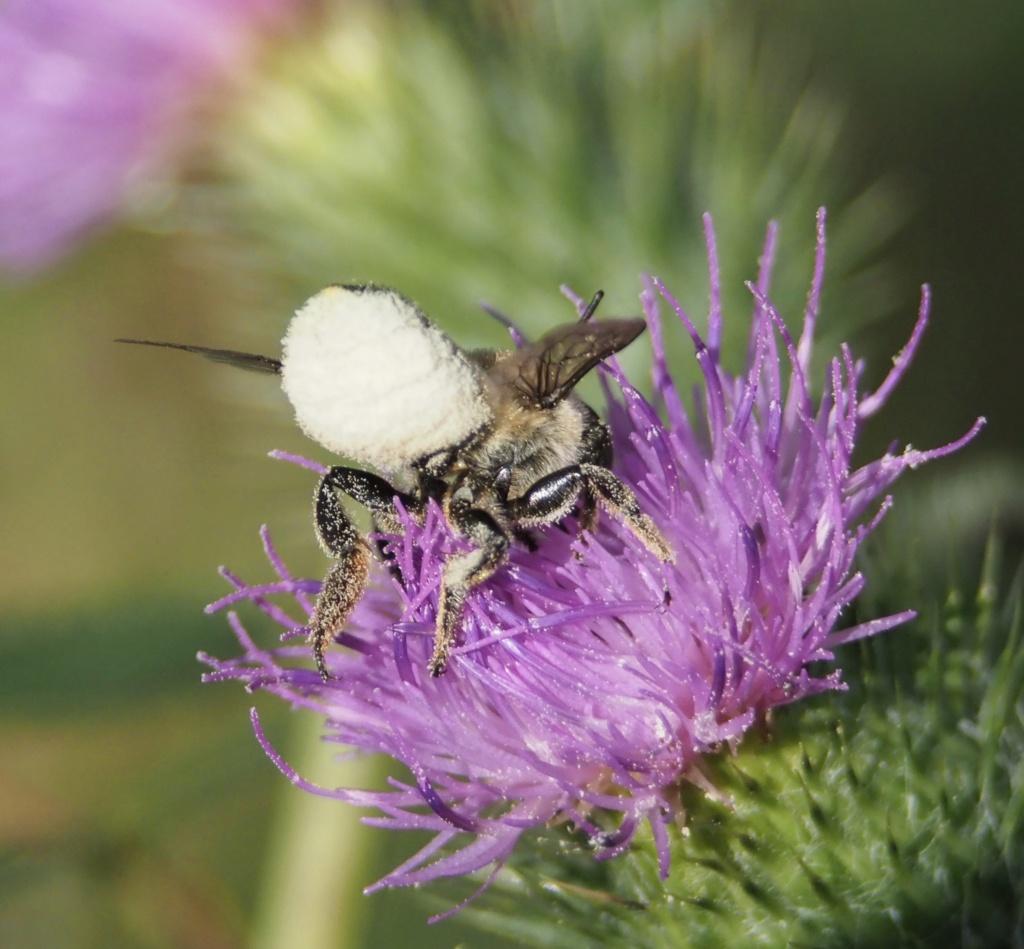 abeille malade?  P8160011
