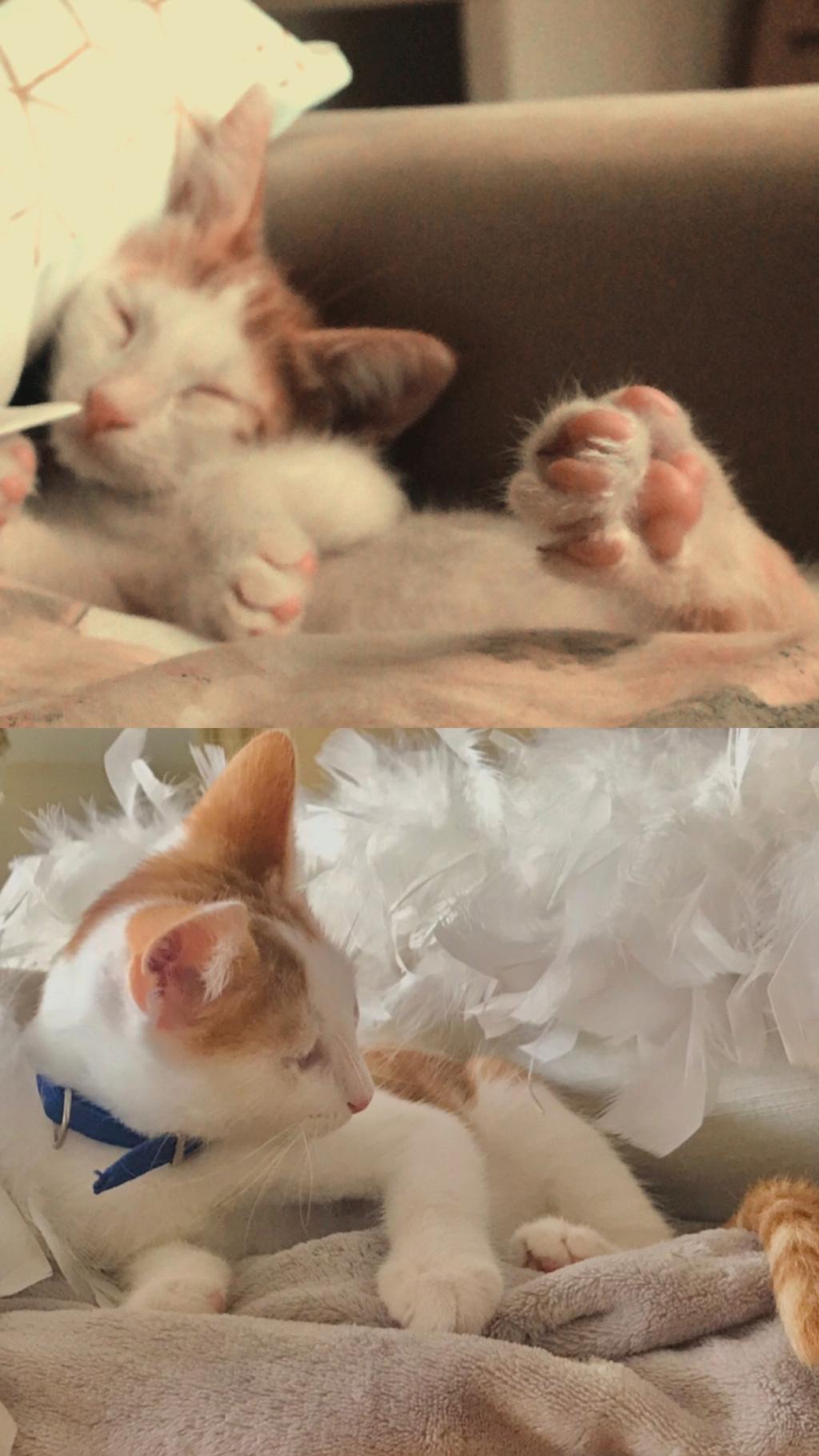 Γατάκι 4 μηνών ψάχνει σπίτι 6d019611