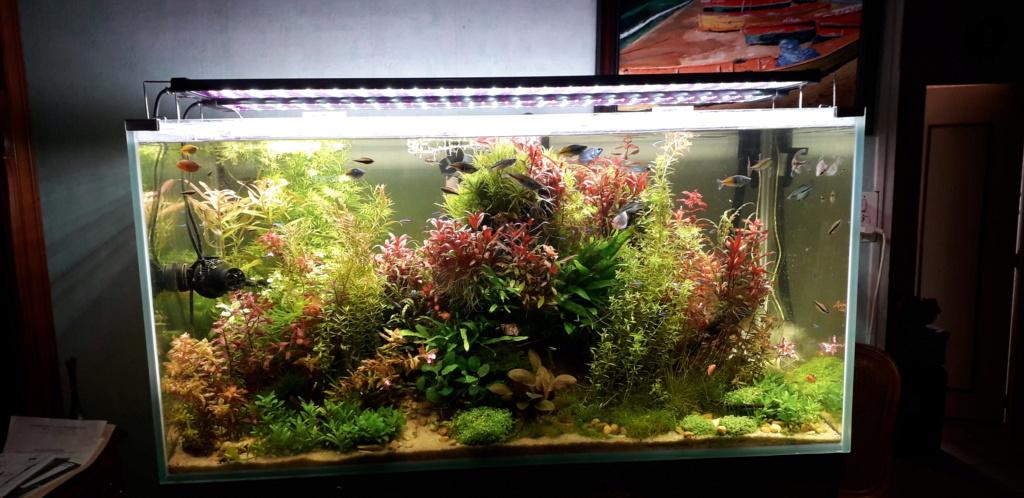 aquarium de plante-440l capacity et meuble custom traduit -  Grand_10
