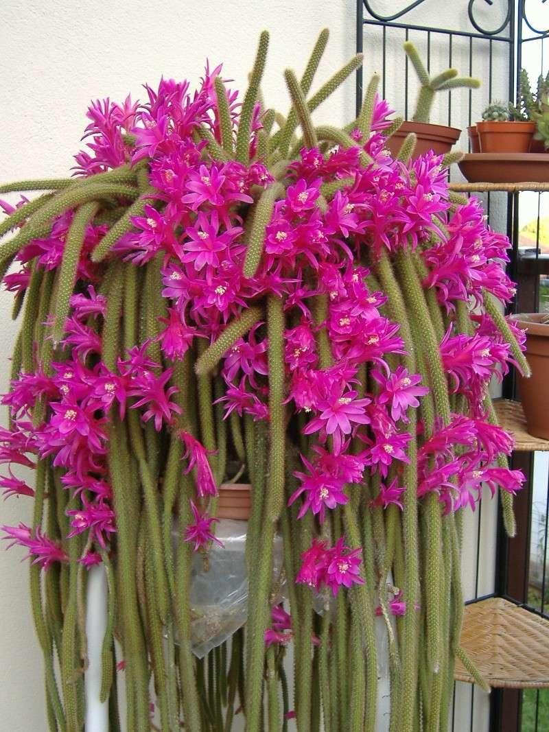 autres plantes... Dscf0910