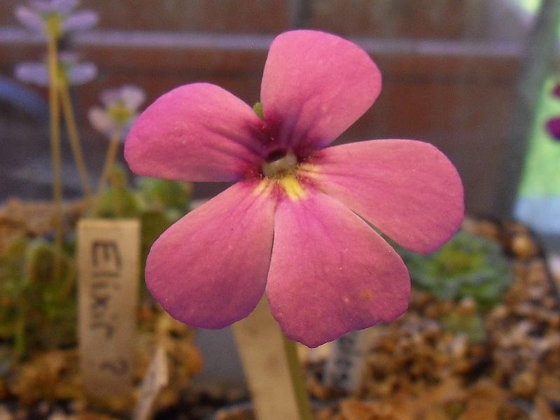 Quelques fleurs Sdc19537
