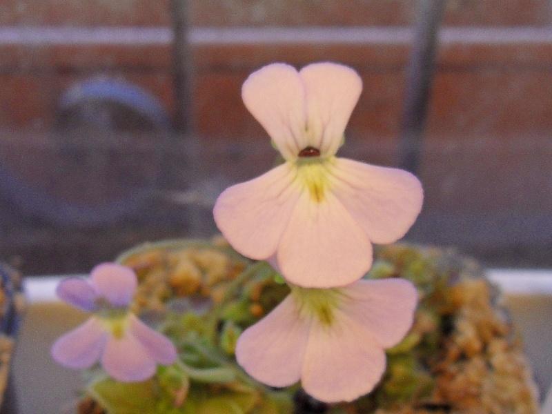 Quelques fleurs Sdc19538