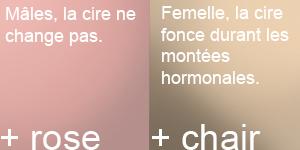Le sexe et la couleur de la cire 3.0 Cires_10