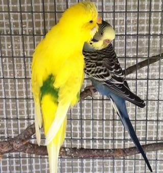 Mutation nouveau couple svp Fuhk_h10
