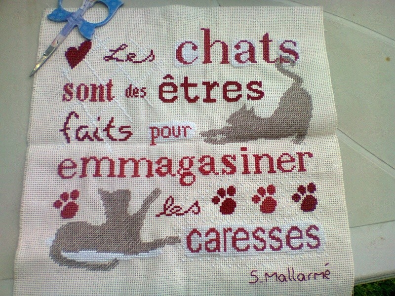 Sal LLP les chats - FINI Photo124