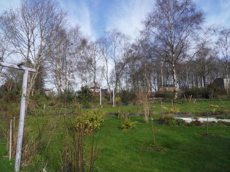 le jardin de danyland - Page 4 01-sdc16