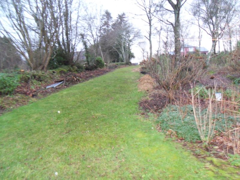 le jardin de danyland - Page 4 Sdc15611