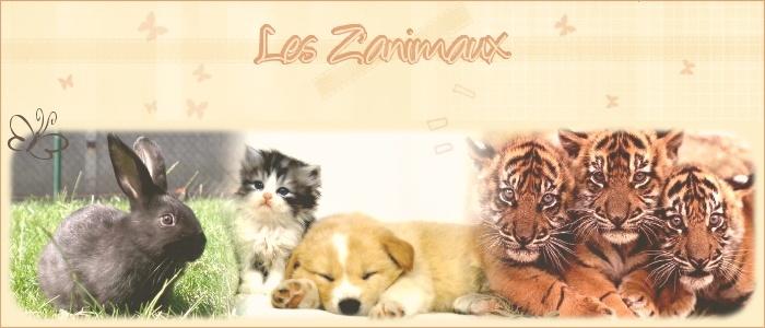 Petites Bêtes du Monde - Page 2 Ban2110