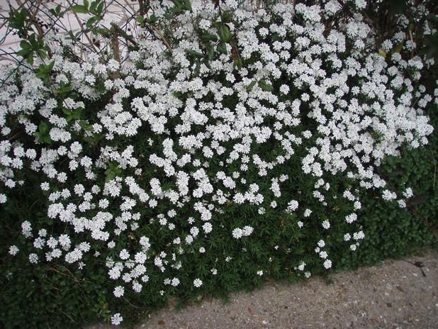 Jardin et Partage - Portail Fleurb10