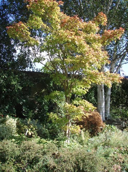 Photos d'arbres! Joli_a11