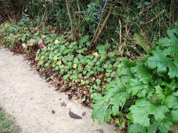 je cherche quelque plantes vivaces Macror10