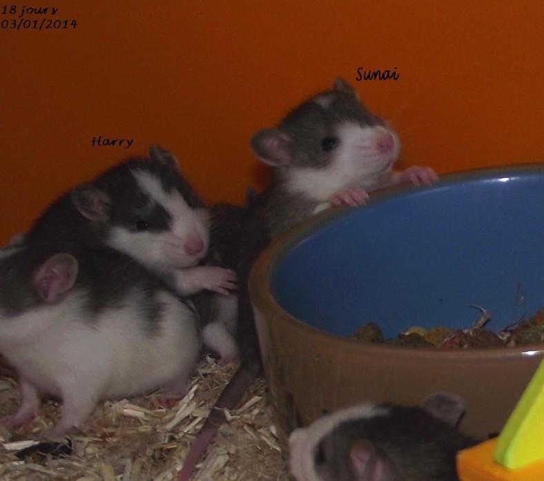 Les ratous de breizhael - 3eme génération - Page 2 Dscf4212