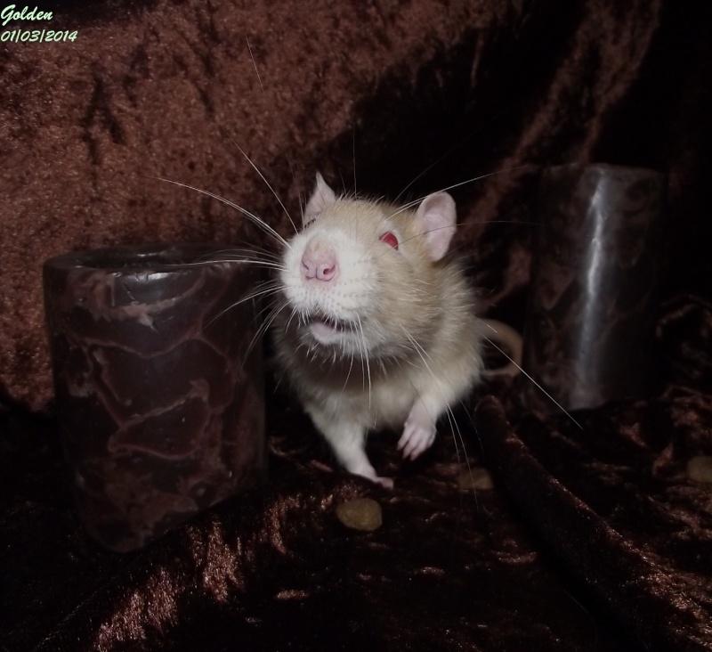 Les ratous de breizhael - 3eme génération - Page 2 Dscf4911