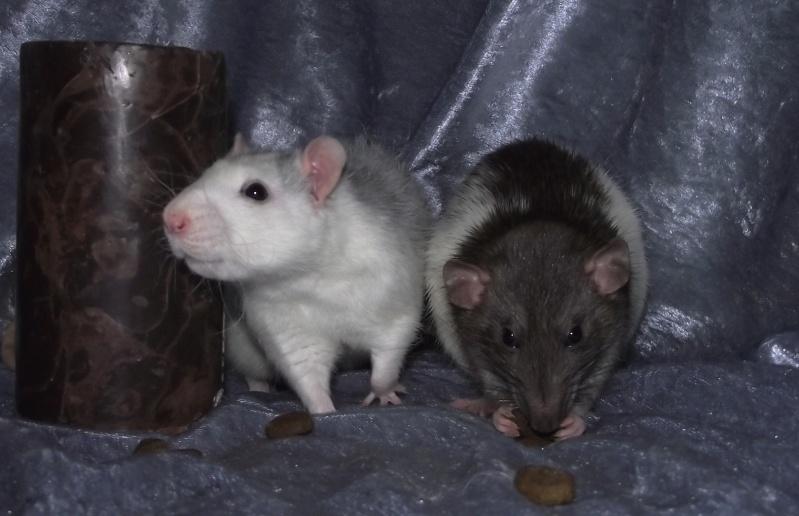 Les ratous de breizhael - 3eme génération - Page 2 Dscf4913