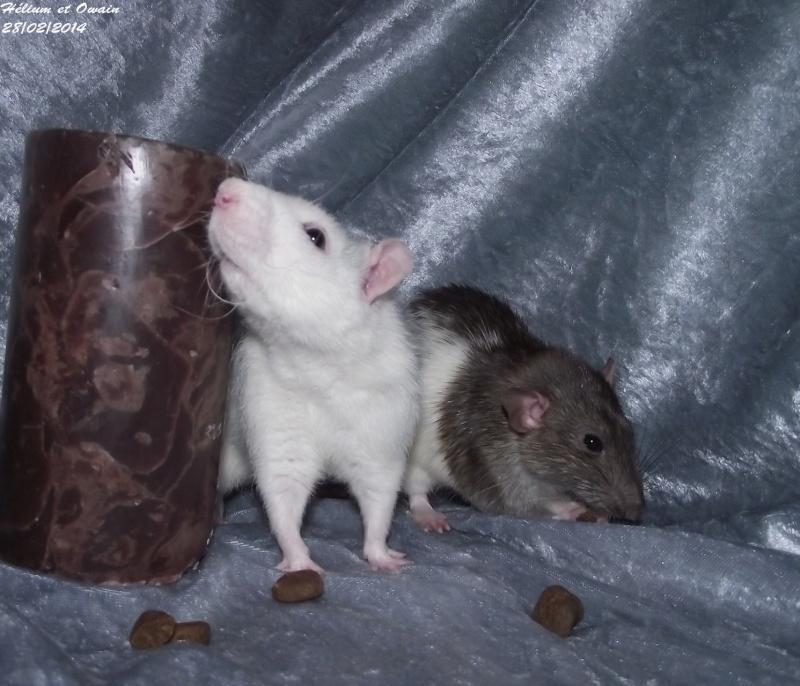 Les ratous de breizhael - 3eme génération - Page 2 Dscf4914
