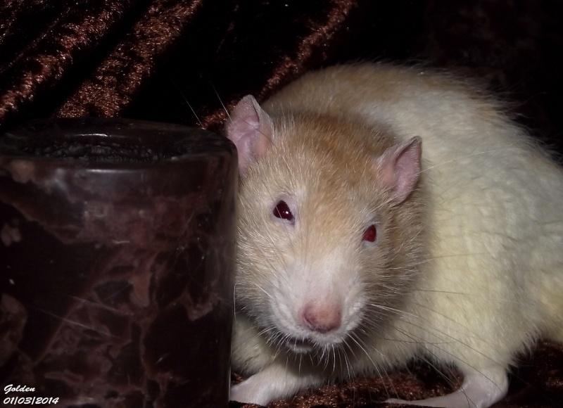 Les ratous de breizhael - 3eme génération - Page 2 Dscf5011
