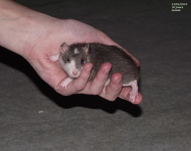 Les ratous de breizhael - 3eme génération - Page 2 Sunaa_11