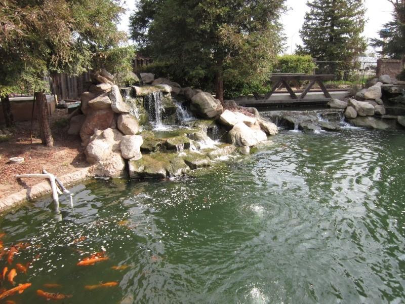 Joli bassin. Img_1425