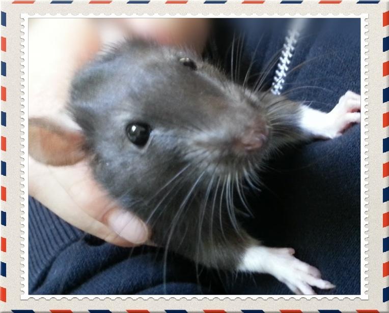 13 petit rats en Bretagne  - Page 3 140410