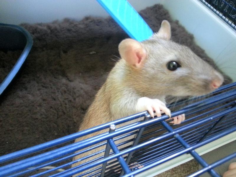 13 petit rats en Bretagne  - Page 3 140610