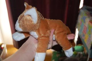 chaton caramel et blanc à adopter Dsc_0615