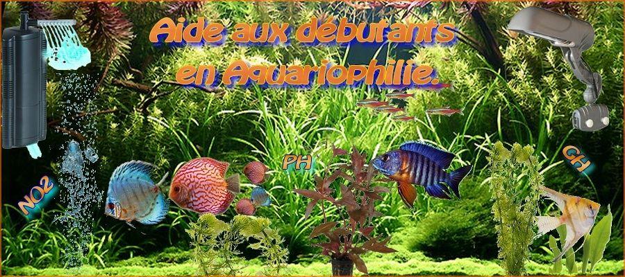 Partenaire aquarium d'eau douce (aide aux débutants en aquariophilie) Bannie10