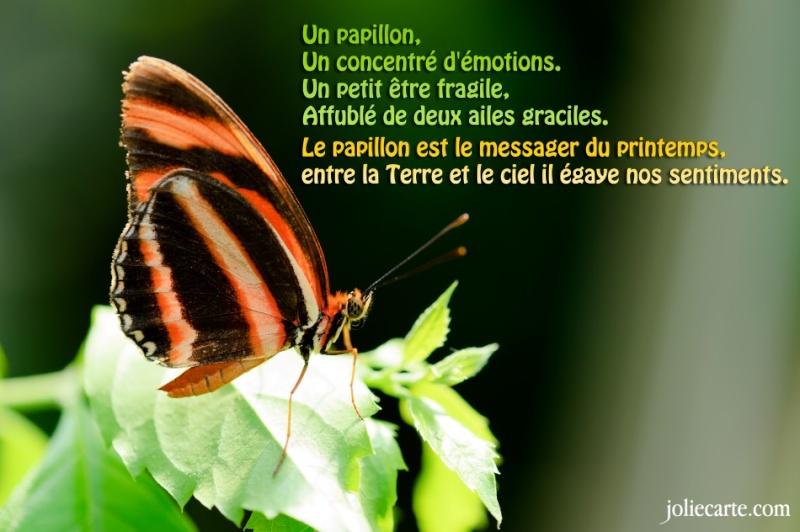 """""""Bonjour / Bonsoir"""" !!! Papill10"""