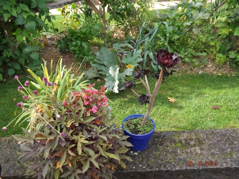 Jardin pour la Paix - Bitche . Dscf8514