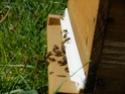 petites bêtes qui montent, qui volent - 2  Dscf5015