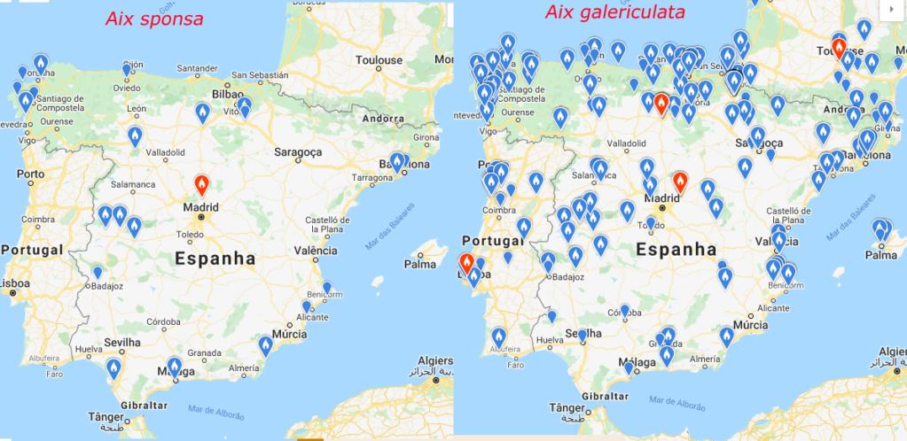 Registos de Aix galericulata e Aix sponsa Aix_eb10