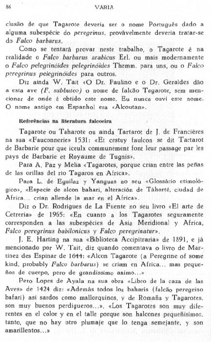 Falco subbuteo: falcão-tagarote ou ógea? - Página 2 Fal-su11