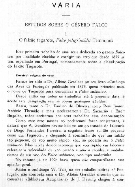 Falco subbuteo: falcão-tagarote ou ógea? - Página 2 Fal-su12