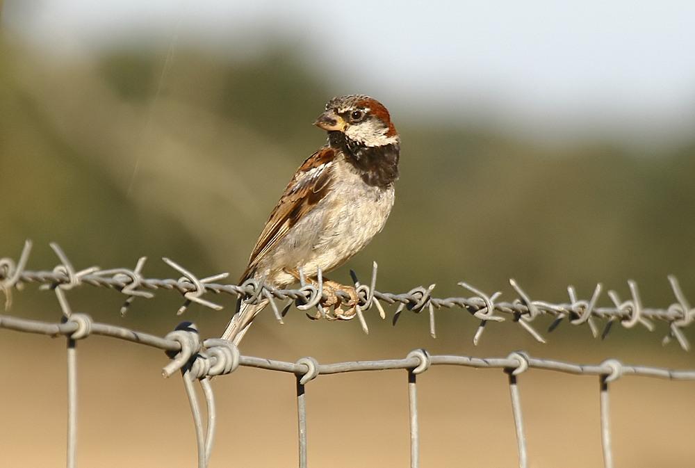 Fórum Aves - Birdwatching em Portugal - Portal Pas-do12