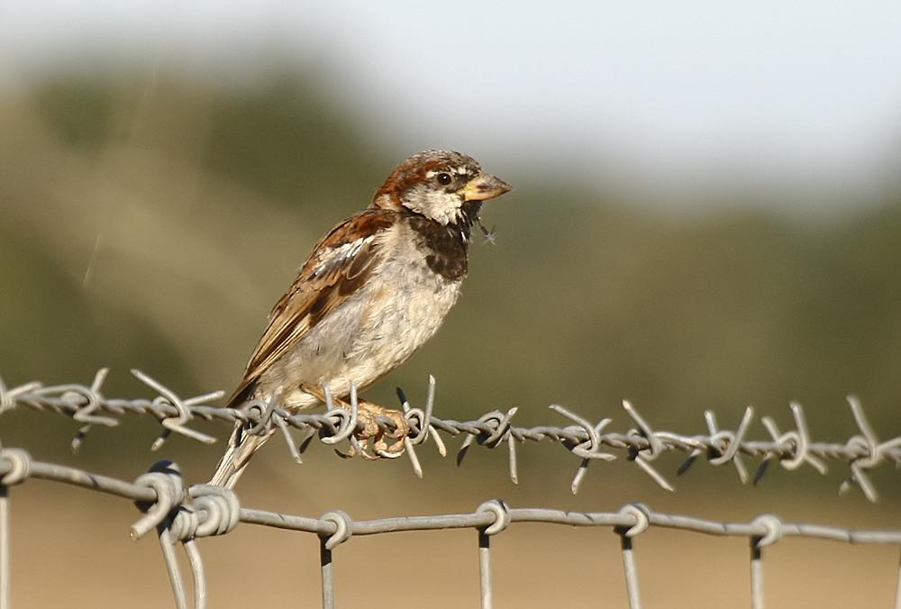 Fórum Aves - Birdwatching em Portugal - Portal Pas-do13